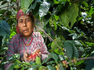 Camatkara: Coffee beyond Tropicals!